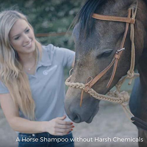 Cedarsuds Natural Horse Shampoo