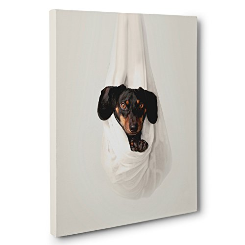 Dachshund Photography CANVAS Wall Art for sale  Delivered anywhere in USA
