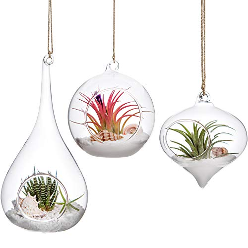 Mkono 3 Pack Glass Hanging Planter Air Fern Holder Terrarium Plants Hanger Vase Home Decoration for Succulent Moss Tillandsias Air Plants, Olive, Globe and Teardrop (Teardrop Vases Hanging Glass)