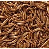 2kg uccelli selvatici secchi Mealworms Vermi idromassaggio - High Protein Treat Feed - Adatto per il pollame, ricci, polli, anatre, pesci, rettili e piccoli mammiferi