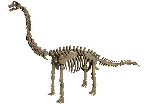 Pose skeleton of the dinosaur Brachiosaurus 104