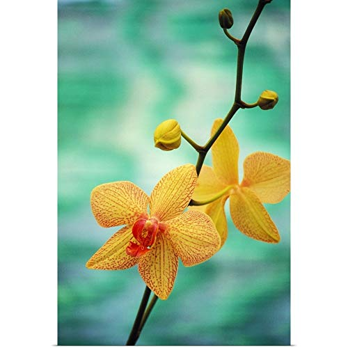 GREATBIGCANVAS Poster Print Entitled Hawaii, Yellow Dendrobium with Orange Speckles, Orchid Flower On Plant by Allan Seiden 12