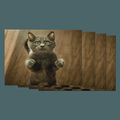 Moslion Cat Place Mats Set of 4. Cute Animal Grey Standing Kitten on Brown Wooden Floor Washable Fabric Placemats for Dining Room Kitchen Table Decor (Standing Kitten)