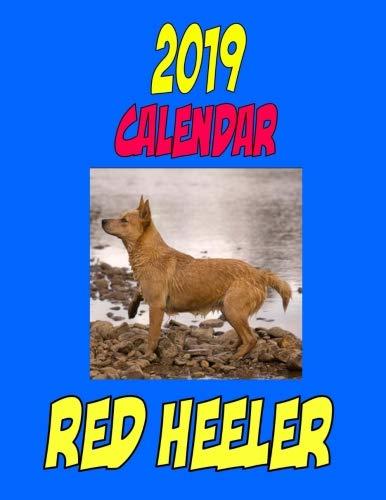 red heeler calendar - 1