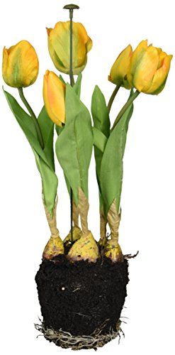 allstate-floral-tulip-arrangement-with-5-tulip-blooms-and-bulbs-16