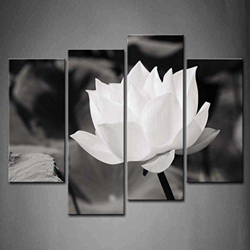 lotus panel - 4