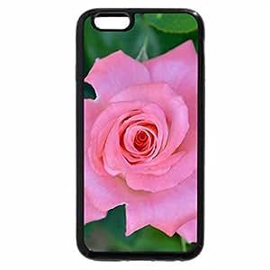iPhone 6S Plus Case, iPhone 6 Plus Case, flower beautiful rose pink