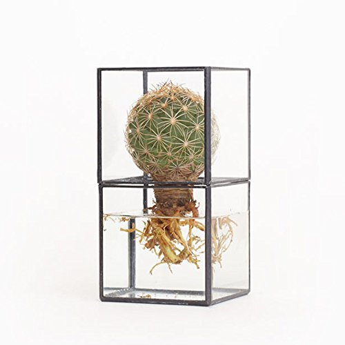 10¹² Terra Hydro 80 Hydroponics Glass Terrarium for Cacti & Succulents by 10¹² Terra