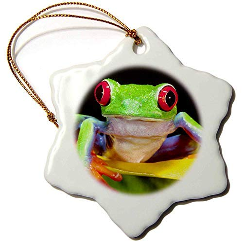 Ditooms Red Eye Tree Frog On A Calla Lily, Central America Na02 Dno0025 David Northcott Snowflake Porcelain Ornament, 3-Inch ()