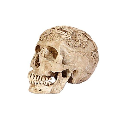 MonkeyJack 1:1 Scale Lifesize Realistic Resin Human Skull Gothic Halloween Party Decoration Ornament - White 2 by MonkeyJack