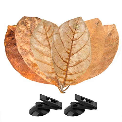 SunGrow Leaf Hammocks for Betta Fish - Lightweight and Realistic Resting Spot - BPA-Free, Practical - Comfortable & Safe (Betta Bed (6 Packs))