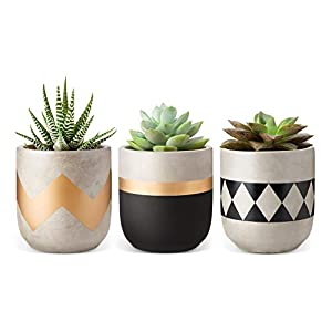 Mkono Cement Succulent Planter Set of 3 Concrete Plant Pots Modern Flower Pots Indoor for Cactus Herb or Small Plants…