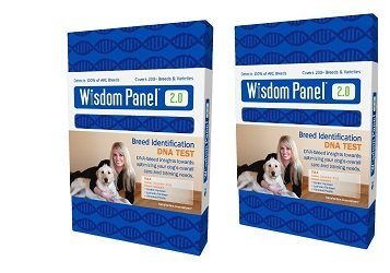 Wisdom Panel DNA Kit 2Pk for 2 DOGS