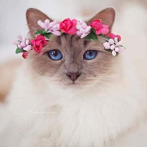 Coronas para gato - diadema para perros pequeños - corona de flores para mascotas: Amazon.es: Handmade