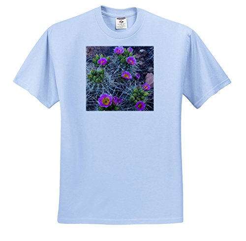 3dRose Danita Delimont - Cactus - USA, Utah, Arches NP. Whipples fishhook Cactus Blooming and With Buds. - T-Shirts - Toddler Light-Blue-T-Shirt (2T) - Fish Hook Pics