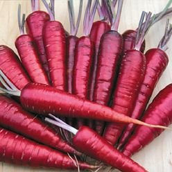 Purple Dragon Carrot 350 Seeds - Absolutely unique!