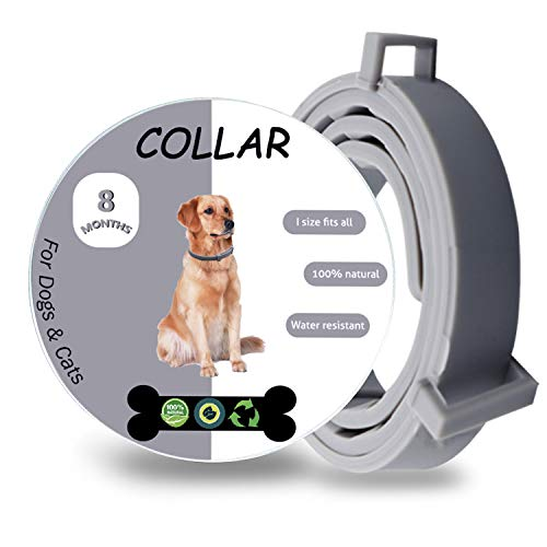 - Wanqueen Flea & Tick Collar for Dogs, 8 Month Flea and Tick Prevention for Dogs, Waterproof and Natural Essential Oil Extract, Adjustable for All Breeds and Sizes