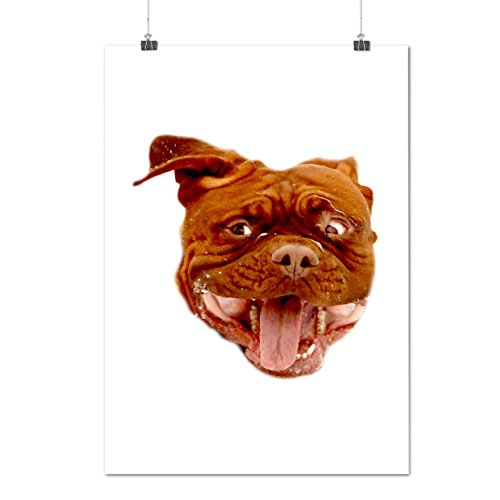 My Bulldog Cute Funny Dog Doggy Face Matte/Glossy Poster A3 (12x17 inches) | Wellcoda (Sit Face Chubby)