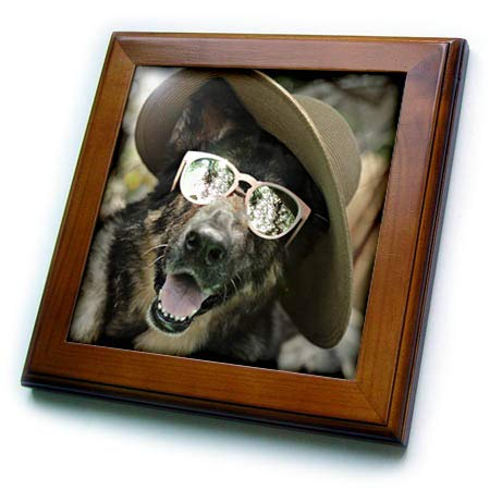 3dRose Stamp City - Animals - Photograph of a German Shepherd Wearing a hat and Sunglasses. - 8x8 Framed Tile (ft_315568_1) ()