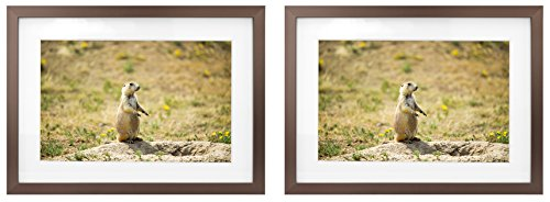Golden Bronze Frames Set - Golden State Art Two 5x7 Picture Frames - Antique-Bronze Aluminum - Fit Photo 4x6 With Ivory Mat or 5x7 without Mat - Metal Frame by Shiny Brushed Style - Real Glass (5x7, Set of 2, Antique-Bronze)