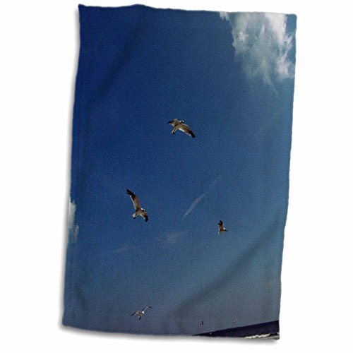 Trio Gull Sea (3dRose Dawn Gagnon Photography - Beach Scenes - Seagulls in Flight, a Trio Flying Against a Vivid Blue Beach Sky - 15x22 Hand Towel (TWL_165598_1))