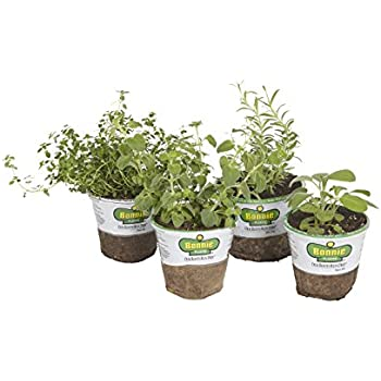 Bonnie Plants 4P402 Urban Herb Garden (4-Pack)