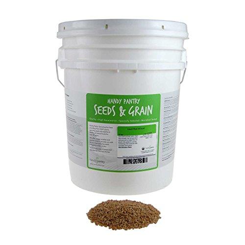 Organic Hard Red Wheat Seed: 35 Lb - Handy Pantry Brand - Grow Wheatgrass, Flour, Grain & Bread, Emergency Food Storage, Ornamental Wheat Grass - Non-GMO, Sprouting Wheat Berries - High Germination