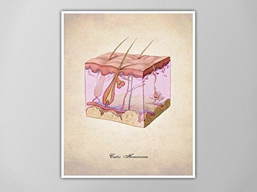Amazon Human Skin Human Anatomy Art Print Human Anatomy Print