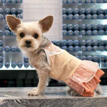 Amazon com : Dogo Pet Fashions Citrus Fashion Orange Designer Dress