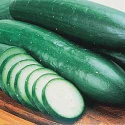 -  Burpless Bush Cucumber - 25 Seeds-GARDEN FRESH PACK!