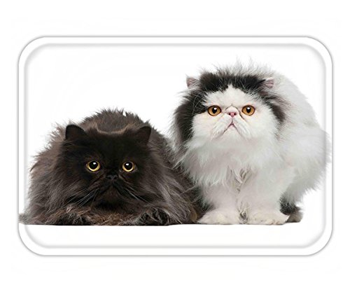 Minicoso Doormat Kitten Decor Cute Persian Cats Sitting in front ot White Background Digital Print Black and - White Cat Tiffany