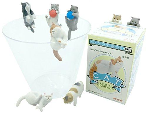 Kitan Club Putitto Exotic Shorthair Cat Collectible Figure Mystery Blind Box - 1 Random Piece 1 Random Blind Box