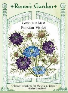 Nigella - Persian Violet Seeds ()