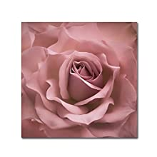 Misty Rose Pink Rose by Cora Niele, 14x14-Inch Canvas Wall Art