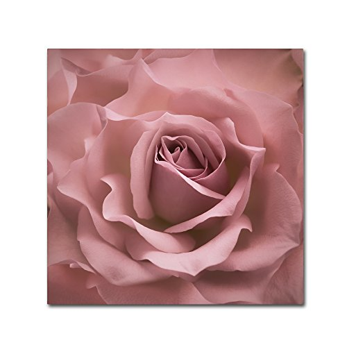 Cora Rose - Misty Rose Pink Rose by Cora Niele, 24x24-Inch Canvas Wall Art