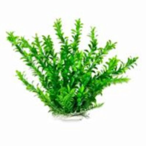 AQUATOP AQUATIC SUPPLIES 819603014341 Anacharis Like Aquarium Plant, 12'', Green by Aquatop Aquatic Supplies
