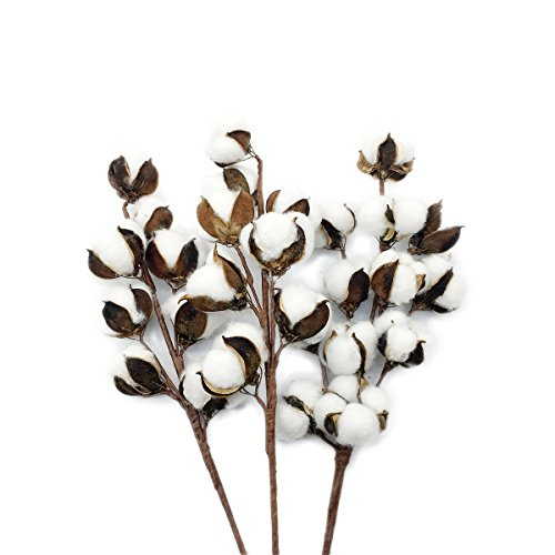"Cotton Stems Cotton Boll Branches Floral Decor Cotton Stem Style Display 3pcs (19.7"",22"" Tall)"