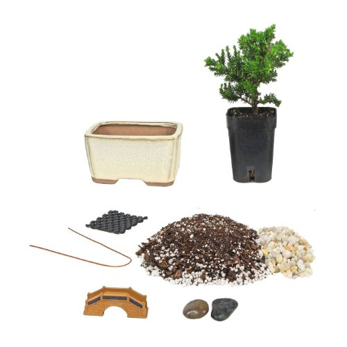 Eve's Bonsai Tree Starter Kit, Complete Do-It-Yourself Kit with 2 Year Old Starter Japanese Juniper
