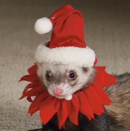 Marshall Ferret Santa Suit -