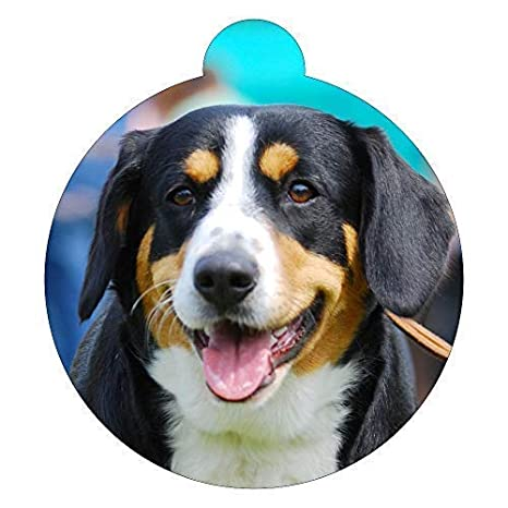 Lokipets Appenzeller Sennenhunde Race de Perro Image Etiqueta ...