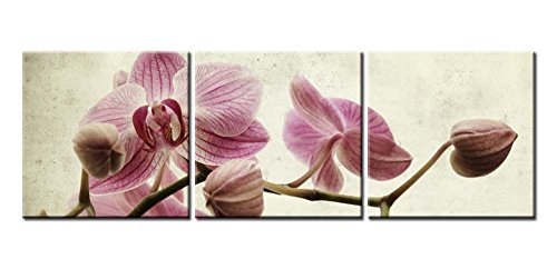 Canvas Print Wall Art Painting For Home Decor Tropical Pink Butterfly Orchid Flowers With Branch Blooming Isolated On White Vintage Background Floral Phalaenopsis 3 Pieces Panel Paintings Modern Giclee Stretched And Framed Artwork The Picture For Living Room Decoration Flower Pictures Photo Prints On Canvas - Tropical Flower Paintings