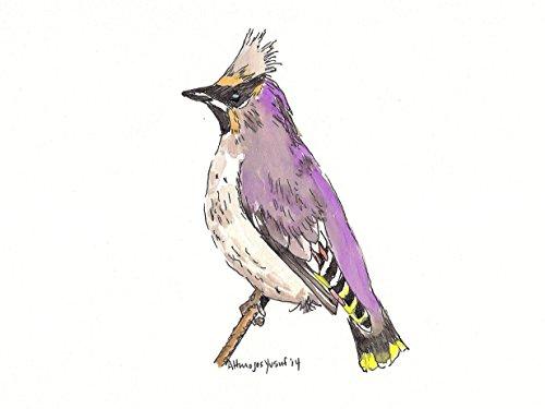 Original Audubon Artwork - 2