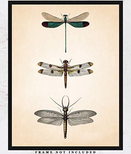 Vintage Dragonflies Illustration Wall Art Print: Unique Room Decor for Boys, Girls, Men & Women - (11x14) Unframed Picture - Great Gift Idea (Prints Fly Dragon)