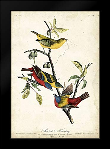 Painted Bunting 13x18 Framed Art Print by Audubon, John ()