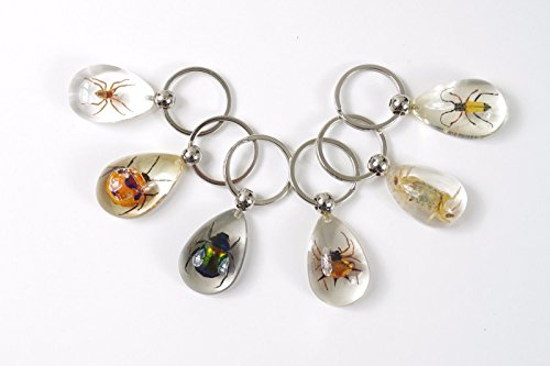 6-pieces-real-insect-key-chain-in-acrylic-one-free-bracele