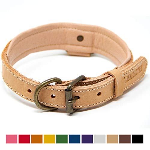 - Logical Leather Deluxe Padded Genuine Full Grain Leather Collar (Medium, Tan)