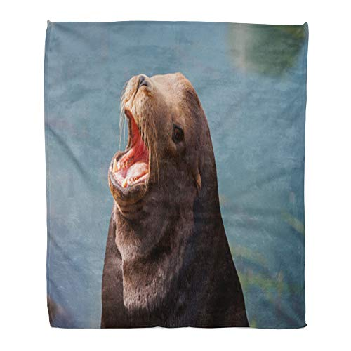 Emvency Throw Blanket Warm Cozy Print Flannel Brown Animal California Seals Commonly Called Sea Lions in Morro Bay USA Bark Comfortable Soft for Bed Sofa and Couch 50x60 Inches
