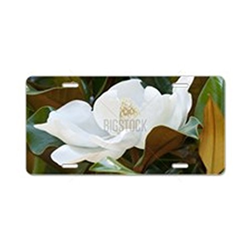 CafePress - Flower of the Magnolia gran Aluminum License Plate - Aluminum License Plate, Front License Plate, Vanity Tag
