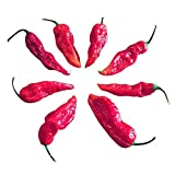 20 GHOST PEPPER SEEDS - SCARY HOT Naga Bhut Jolokia Cobra Chili Vegetable *Combined Ship