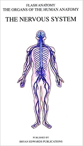 nervous system ii anatomy review